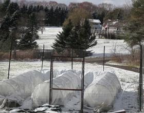 Low Tunnels Under Snow
